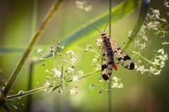 Insetto in primavera del fiore fotografia stock