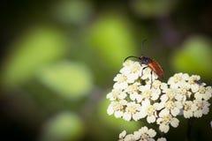 Insetto in primavera del fiore immagini stock libere da diritti