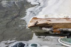 Insetto su un collegamento di legno la banca di una corrente, Altai, Russia fotografie stock