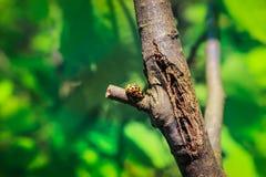 Insetto sulle palpebre in primavera fotografia stock libera da diritti