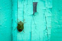 Insetto verde a bordo Fotografia Stock
