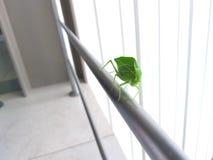 Insetto verde nelle scale fotografie stock
