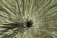 Insidan av en palmliljaväxt Arkivfoton