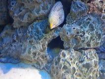 Insidan för havsfisken vaggar grottan Arkivbilder