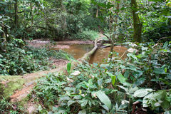 Inside the African Rainforest. River crossing trail inside on the most humid forests in the world Stock Photo