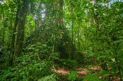 Inside of the amazonian Jungle, surrounding of dense vegetation in the Cuyabeno National Park, South America Ecuador Royalty Free Stock Images