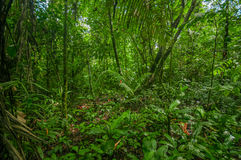 Inside of the amazonian Jungle, surrounding of dense vegetation in the Cuyabeno National Park, South America Ecuador Stock Photography