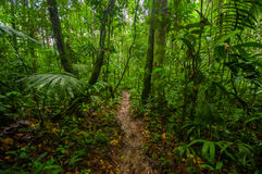 Inside of the amazonian Jungle, surrounding of dense vegetation in the Cuyabeno National Park, South America Ecuador.  Stock Photo