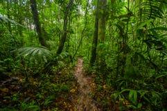 Inside of the amazonian Jungle, surrounding of dense vegetation in the Cuyabeno National Park, South America Ecuador Stock Photo