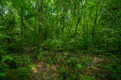 Inside of the amazonian Jungle, surrounding of dense vegetation in the Cuyabeno National Park, South America Ecuador.  Stock Photos