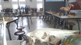 Inside Animal Anatomy Teaching lab Stock Photos