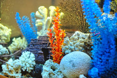 Inside of aquarium Royalty Free Stock Photography