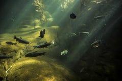 Inside of an aquarium. A bunch of fish in an aquarium Stock Photo