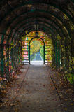 Inside arch with autumnal time lianes and lanterns Royalty Free Stock Photography