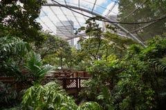 Inside the aviary at the Hong Kong Park. Inside the Edward Youde Aviary at the Hong Kong Park in Hong Kong, China stock photo