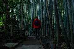 Inside bamboo forest Stock Photos