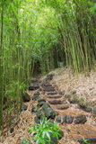 Inside the bamboo forest Royalty Free Stock Photo