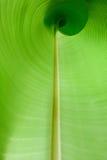 Inside a banana leaf Stock Photo