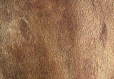 Inside bark detail Stock Images