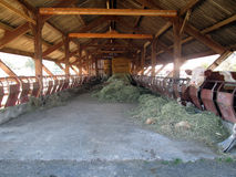 Inside of barn house and cow Royalty Free Stock Photos