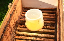 Inside of beehive container with sweet syrup for feeding bees Stock Photo