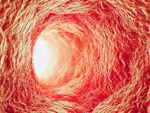 Inside a blood vessel Stock Photography