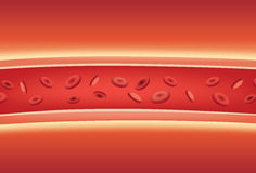 Inside of blood vessels. Illustration about medical and anatomy Royalty Free Stock Images