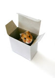 Inside the box. Hamster sitting in a white box