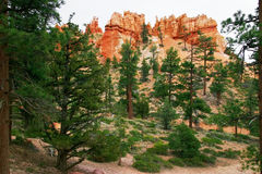 Inside the Bryce canyon Royalty Free Stock Photos