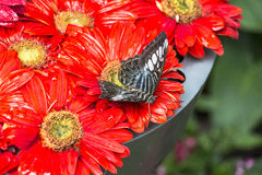 Inside the butterfly Garden of Singapore Airport Royalty Free Stock Photography