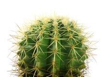 Inside cactus. Green cactus on white background Royalty Free Stock Photo