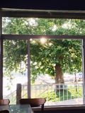 Inside a Cafe with Light Shining through Tree Outside stock photos