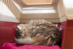Inside a cat carrier. Cat carrier with striped cat under anesthetic, sleeping after surgery at veterinarian. Inside view Stock Photos