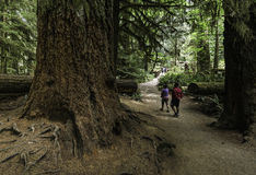 Inside Cathedral Grove forest Royalty Free Stock Photo