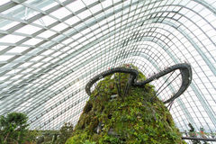 Inside cloud forest dome in singapore Royalty Free Stock Images