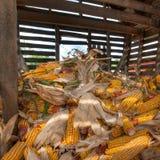 Inside the Corn Crib royalty free stock image