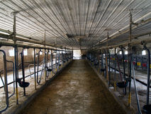 Inside of Dairy Barn Stock Photography