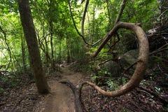 Inside dense jungle. Inside asian dense jungle in Thailand Royalty Free Stock Image