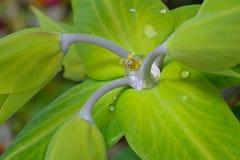 Inside a drop of water Stock Photos
