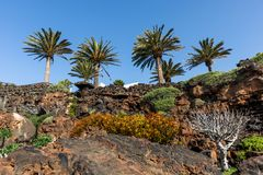 Jameos del Agua. Inside the famous volcanic cave formation Jameos del Agua on Lanzarote island Canary Islands stock photo