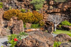 Jameos del Agua. Inside the famous volcanic cave formation Jameos del Agua on Lanzarote island Canary Islands royalty free stock images