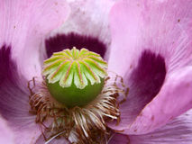 Inside a flower Stock Photography