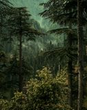 Inside the Forest. Of Reshian Azad Kashmir royalty free stock image