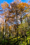 Inside forests of Djerdap national park on a fall sunny day Royalty Free Stock Photos