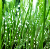 Inside fresh green grass Stock Photos