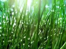 Inside fresh green grass Royalty Free Stock Photos