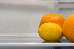 Inside Fridge. A lemon and two oranges inside fridge, sitting alone on the shelf. Copyspace provided Stock Photo