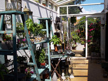 Inside garden conservatory greenhouse Royalty Free Stock Photography