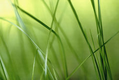 Inside the grass. Beautiful atmosphere inside the grass royalty free stock photo