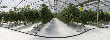 Inside the greenhouse stock photography